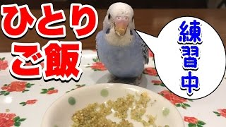 日本語翻訳ONで見ていただければ動画に文字が入っています。 セキセイイ...