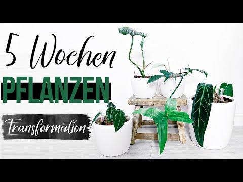 LECA Test | Ich Pflanze Eine Pflanze In Blähton | Hydrokultur Erfahrung Und Pflanzenentwicklung