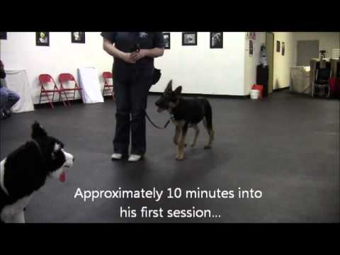 Mythbusting:  'Red Zone' Dogs and Positive Reinforcement
