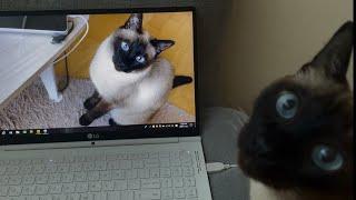 [따루] 노트북 바탕화면 자기인데 다른 고양이 사진인 …
