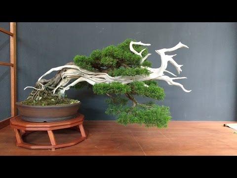 Styling Wind Swept Bonsai Fukinagashi Youtube