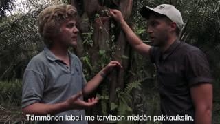 Kuinka monissa käyttämissämme tuotteissa on palmuöljyä?