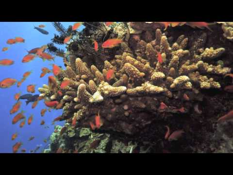 Great Barrier Reef - Australia - UNESCO World Heritage