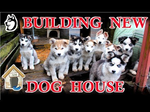 Building A New Dog House For The Husky Family! (2018)