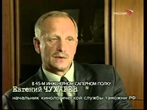 Джек Рассел терьер в Москве. Собака из маски