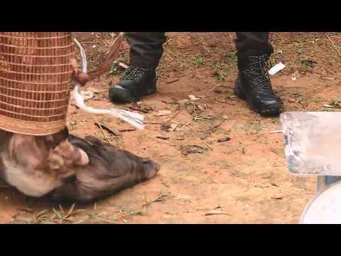 INDONESIAKU | PENYENGKUANG DERITA PENYADAP KARET (02/10/18) 1-3