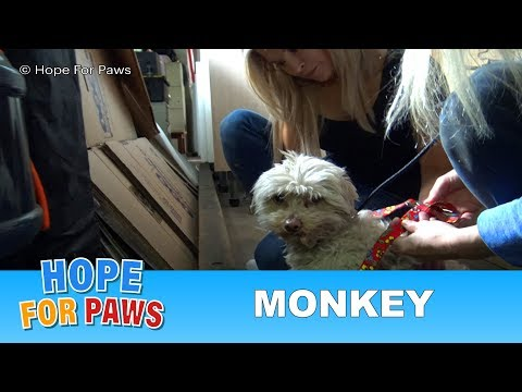 Hope For Paws' first Monkey rescue with a special guest star.