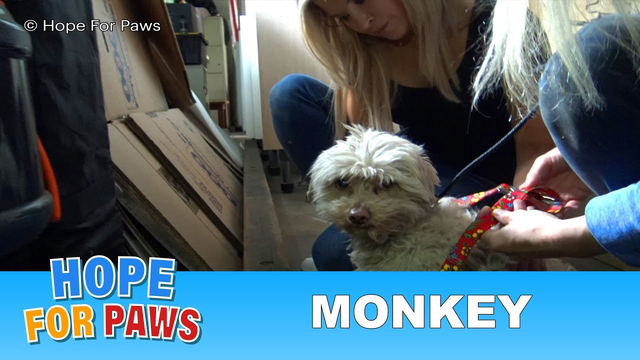 hope-for-paws-first-monkey-rescue-with-a-special-guest-star