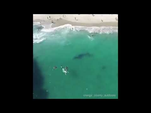 Scary Monenets When Whales Encounter Humans - WTF