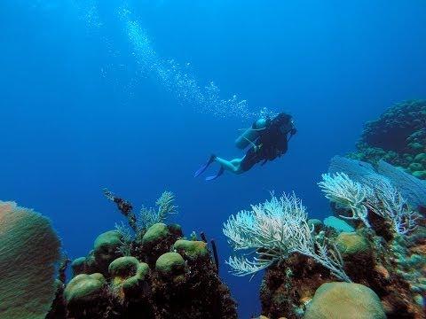 "Catalina Island: Tauchen ""The Wall"" - Dominikanische Republik"