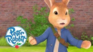 Peter Rabbit - Danger in the Garden   Cartoons for Kids