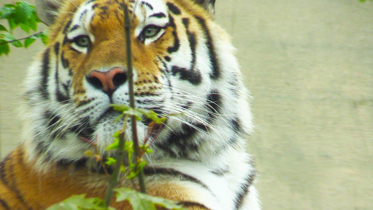Children's Wild Animal Identification Video | Educational Video for Kids