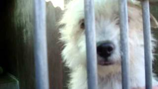 Id # A1066886 Momma Cairn Terrier