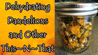 Dehydrating Dandelions and Other This~N~That