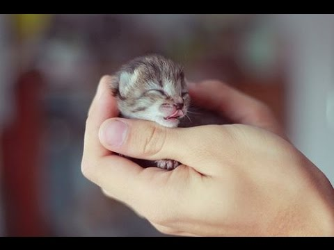 Top 10 Cute Kitten Videos Compilation - Cute Kitten - Cutest Kittens - Kitten