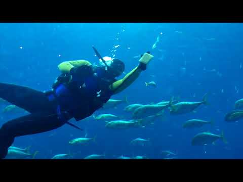 underwater-at-atlantis---the-palm