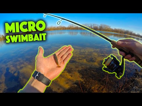 ONE HOUR Fishing Challenge At A New Lake!