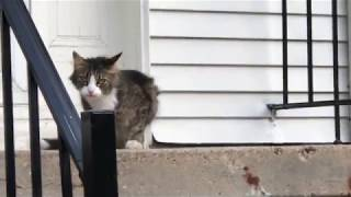 And now a cute cat video