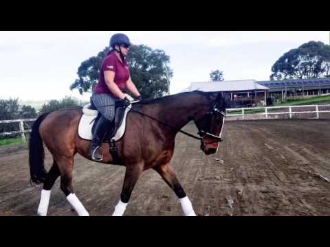 Chilean express schooling June 1