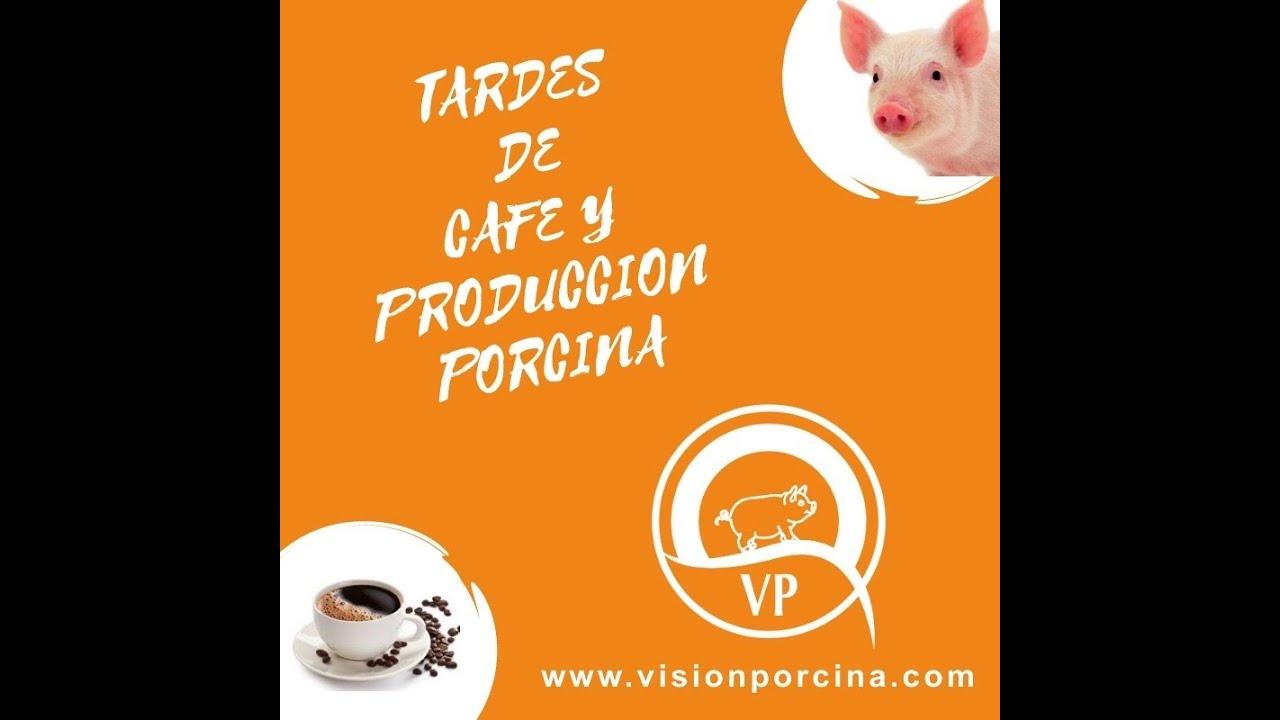 """Tardes de café y producción porcina. """"'Producción porcina en bandas''"""