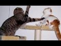 KEEP YOUR FACE AS SERIOUS AS YOU CAN - The BEST ANIMAL video