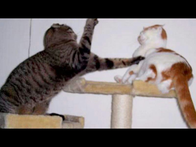 keep-your-face-as-serious-as-you-can-the-best-animal-video
