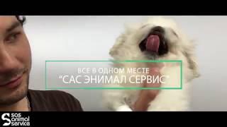 Лапароскопическая БЕЗ РАЗРЕЗОВ стерилизация собак и кошек в ветеринарной клинике САС