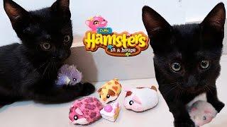 GATINHO FILHOTE Brincando com Hamster da Bia Lobo