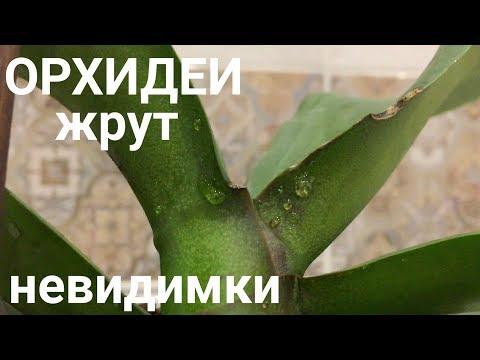 орхидеи жрут невидимые твари / будьте бдительны