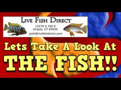 New Live Fish Direct Fish Update! A Detailed Description Of Each Fish