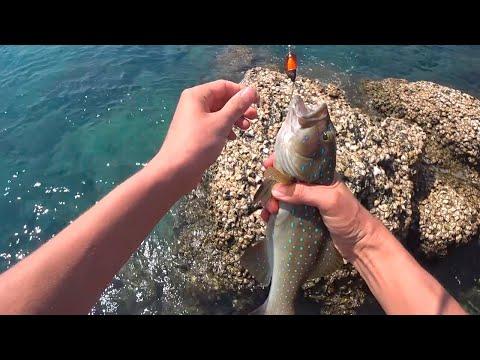 Самостоятельная рыбалка в Паттайе - Остров Ко Лан (Nual Beach) - Рыболовные магазины Паттайи