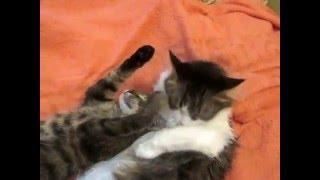 Кошки обнимаются. Моют друг друга