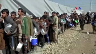 Իրաքի փախստականների ճգնաժամը
