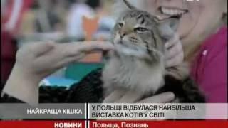 В Польше прошла крупнейшая выставка кошек в мире