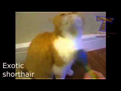 Unusual Cat Breeds   Funny Videos 2015