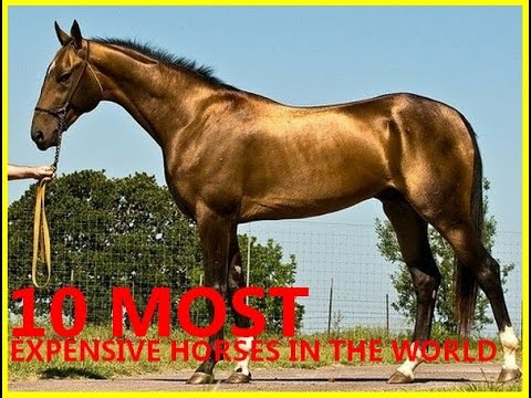10 Most Expensive Horses In The World 2016 Youtube
