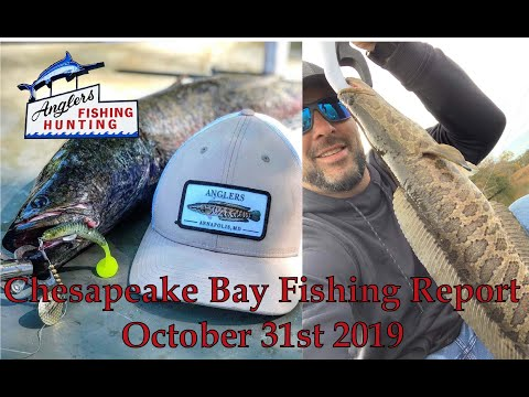 Chesapeake Bay Fishing Report- October 31st 2019