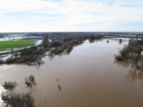 Black Swans, Brown River