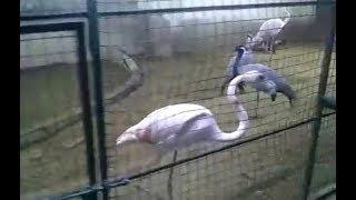 Zoo Park Karachi Animals Lion Pecock Cat Snake | Visit With Ayan