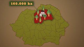 O lege care ne lasă fără 20% din păduri. Inițiator: Liviu Dragnea