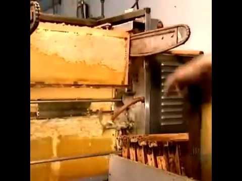 Encyclopedia of life how to produce honey
