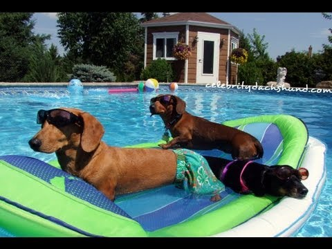 Wiener Dog Pool Party - Featuring Crusoe Celebrity Dachshund - GoPro