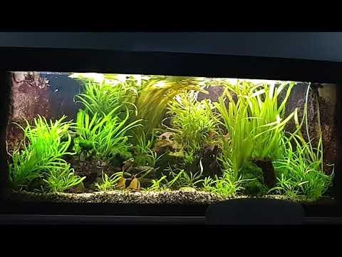 süßwasser aquarium