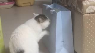 猫よ…それで爪はとげないと思うんだ…