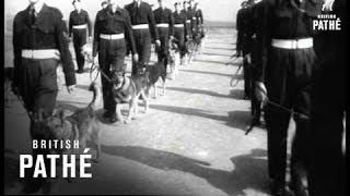 Raf Dogs (1952)
