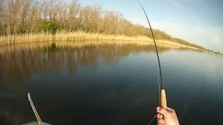 Ловля плотвы нахлыстом   Fly fishing for Roach