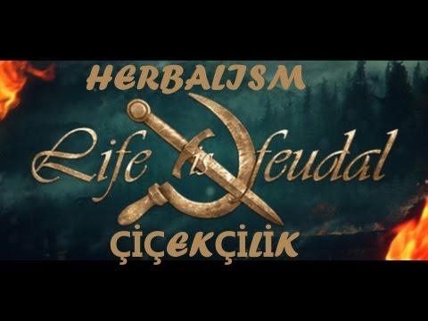 Life is feudal your own rehber сюжетно ролевая игра куня