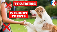 Dog training system without the use of treats - Saro Dog Training Channel Trailer