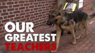 Dog Nation: Presents Real Life Superheroes