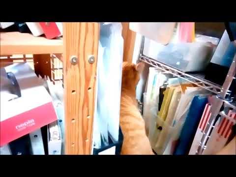 2018.3.1 追いつめられた セブン 猫動画